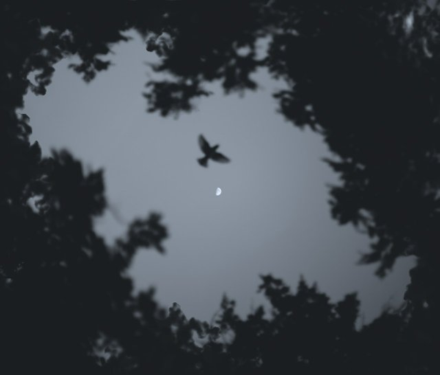 pexels-martin-lopez-2314308.jpg