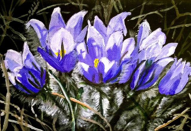 Crocus painting by Shelley Ebbett - edit.jpg
